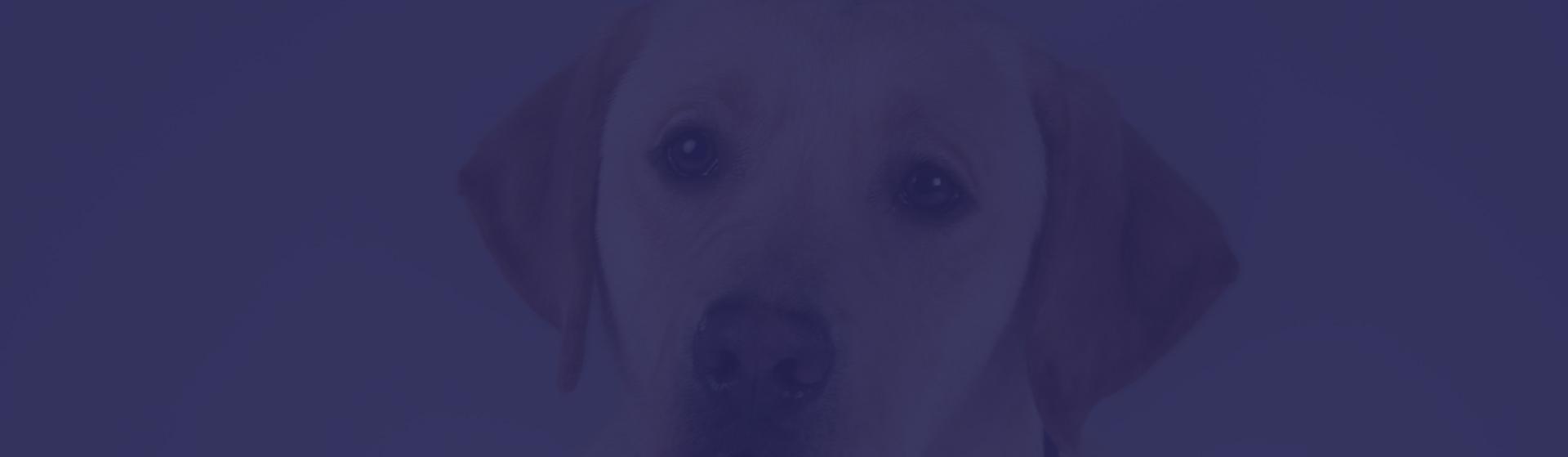 slide-chien1