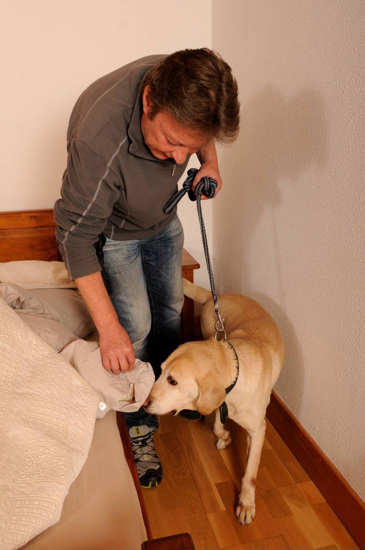 Détection canine de punaises de lit en Suisse