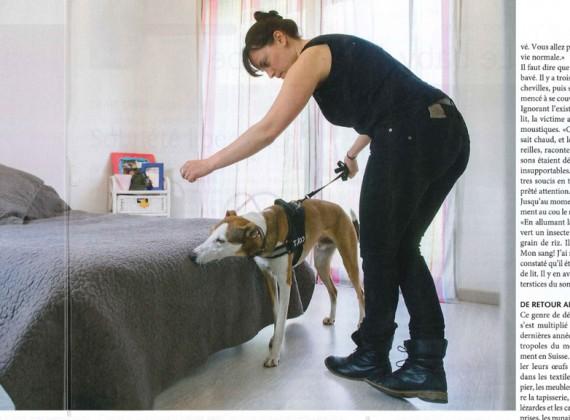 Détection canine de punaises à genève
